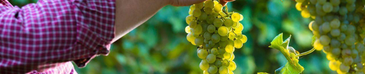 vinogradnik.com.kg